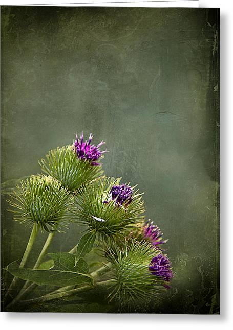 Thistle Greeting Cards - Up to the Point Greeting Card by Evelina Kremsdorf