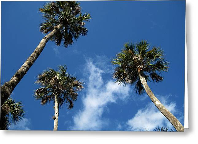 Botanical Greeting Cards - Up to the sky palms Greeting Card by Susanne Van Hulst