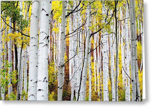 White Photographs Greeting Cards - Uphill Greeting Card by The Forests Edge Photography - Diane Sandoval
