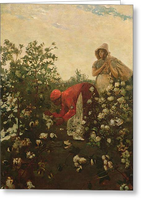 Upland Cotton Greeting Card by Winslow Homer