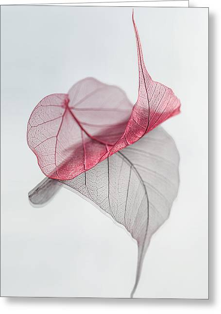 Red Leaves Greeting Cards - Uplifted Greeting Card by Maggie Terlecki