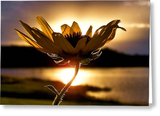 Floral Photographs Greeting Cards - Uplifting Greeting Card by Karen M Scovill