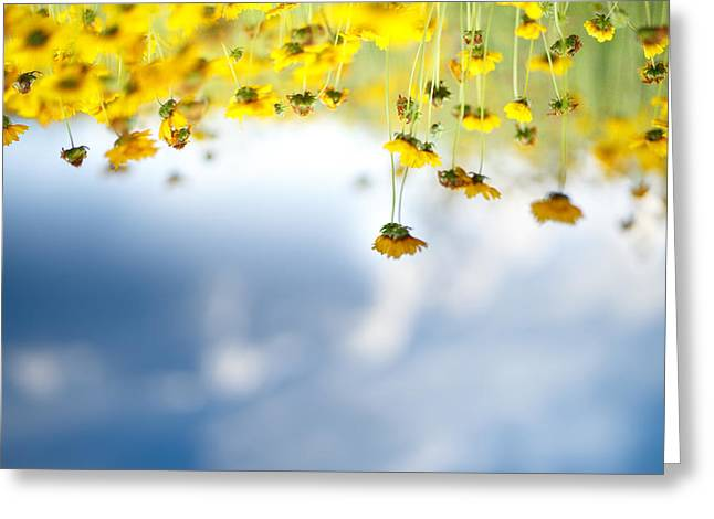 Field Of Flowers Greeting Cards - Upside Down Greeting Card by Shane Holsclaw
