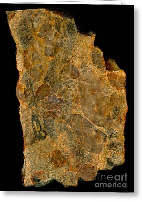 Mineral Photographs Greeting Cards - Uranium Ore Conglomerate Greeting Card by Ted Kinsman