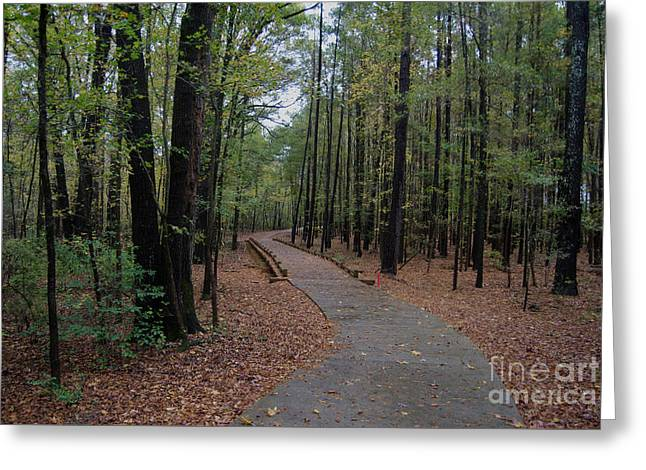 Urban Wilderness Greeting Card by Skip Willits