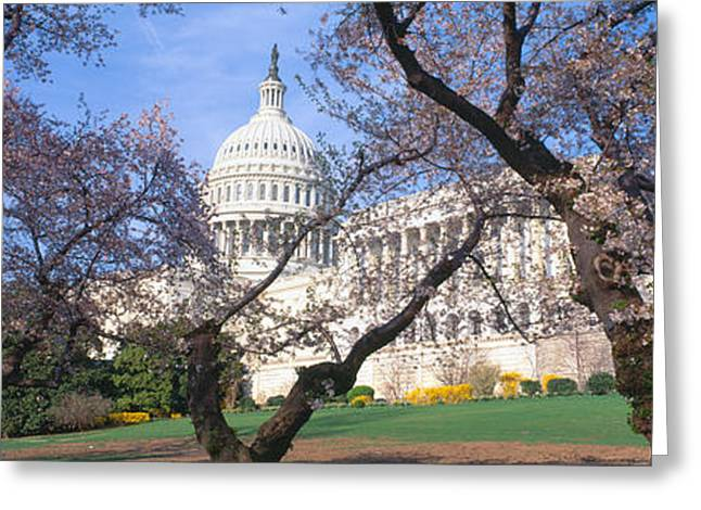 Seat Of Power Greeting Cards - Us Capitol Building And Cherry Greeting Card by Panoramic Images