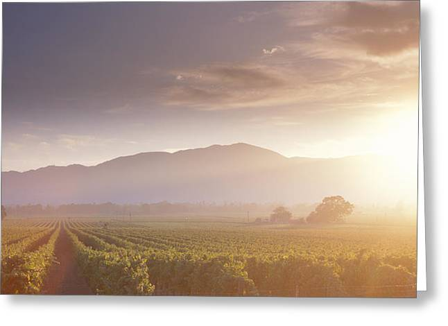 Grapevine Greeting Cards - Usa, California, Napa Valley, Vineyard Greeting Card by Panoramic Images