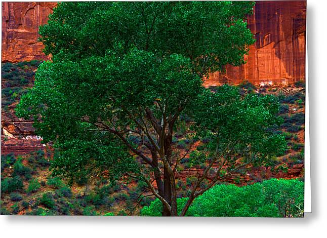 UTAH - COTTONWOOD Greeting Card by Terry Elniski