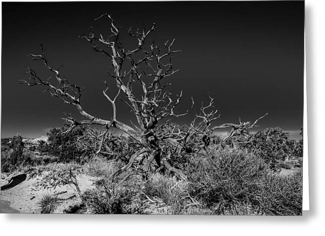 Lifeless Greeting Cards - Utah Juniper In Black and White Greeting Card by Paul Freidlund