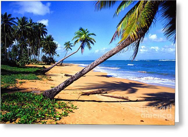 Puerto Rico Photographs Greeting Cards - Vacia Talega Shoreline Greeting Card by Thomas R Fletcher