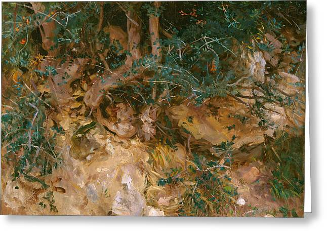 Tree Roots Paintings Greeting Cards - Valdemosa - Majorca - Thistles And Herbage On A Hillside Greeting Card by John Singer Sargent