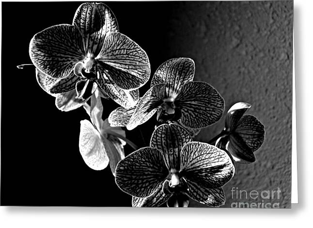 Valentine Bloom Bw Greeting Card by Chalet Roome-Rigdon