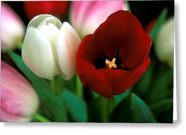 Valentine Tulips Greeting Card by Kathy Yates