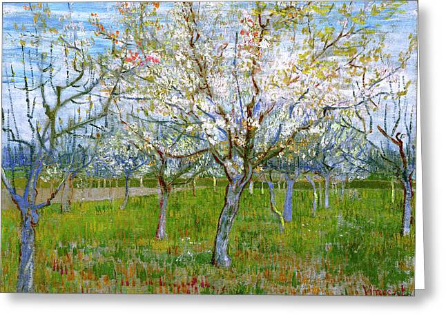 Apricots Paintings Greeting Cards - Van Gogh The Pink Orchard Greeting Card by Vincent Van Gogh