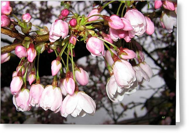 Vancouver Cherry Blossoms Greeting Card by Will Borden