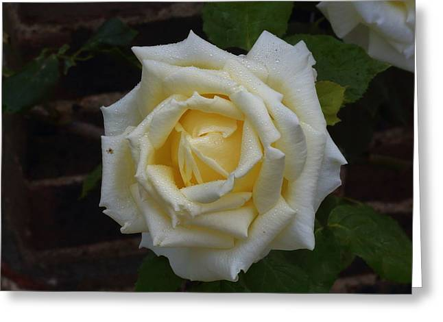 Occasion Greeting Cards - Vanilla With A Twist Rose Greeting Card by Rumyana Whitcher