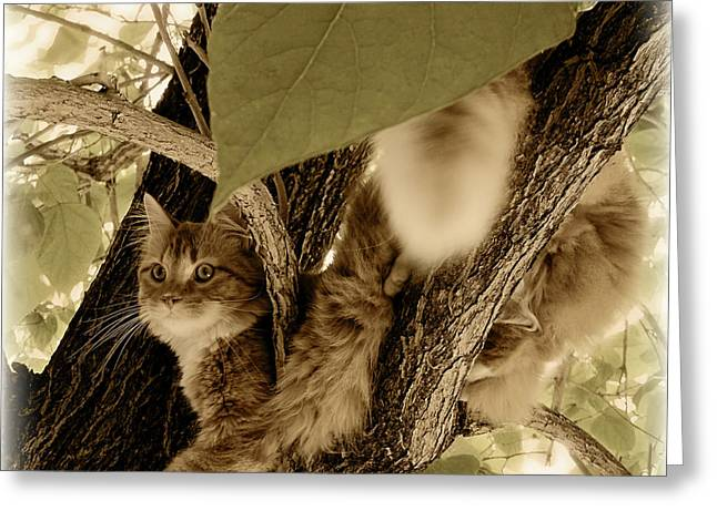Leaves In Hair Greeting Cards - Vantage Point Greeting Card by ShaddowCat Arts - Sherry