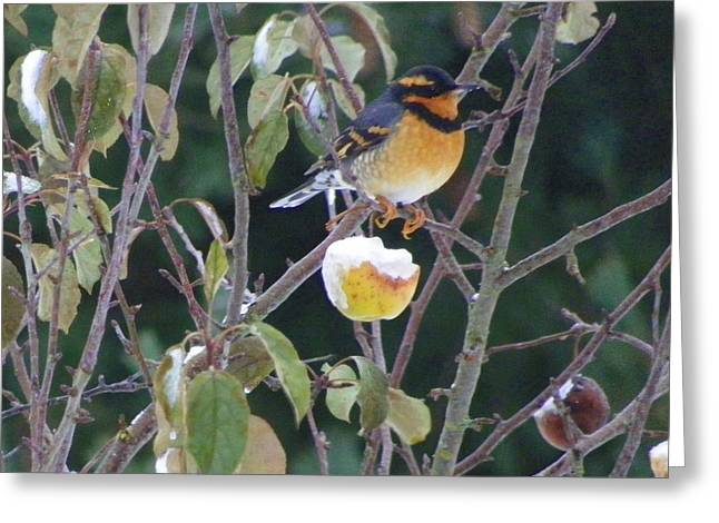 Winter Prints Pyrography Greeting Cards - Varied Thrush Greeting Card by Laurie Kidd