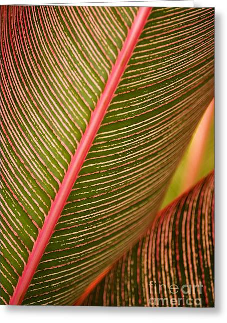 Variegated Ti-leaf 1 Greeting Card by Ron Dahlquist - Printscapes