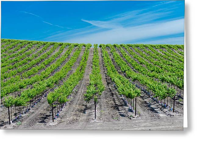 Grape Vineyard Greeting Cards - Vasco Vines Greeting Card by Robin Mayoff