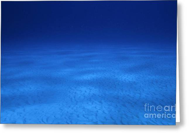 Cozumel Greeting Cards - Vast sandy ocean floor and blue waters Greeting Card by Sami Sarkis