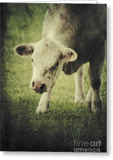 Tiere Greeting Cards - Vegetaria Greeting Card by Angela Doelling AD DESIGN Photo and PhotoArt