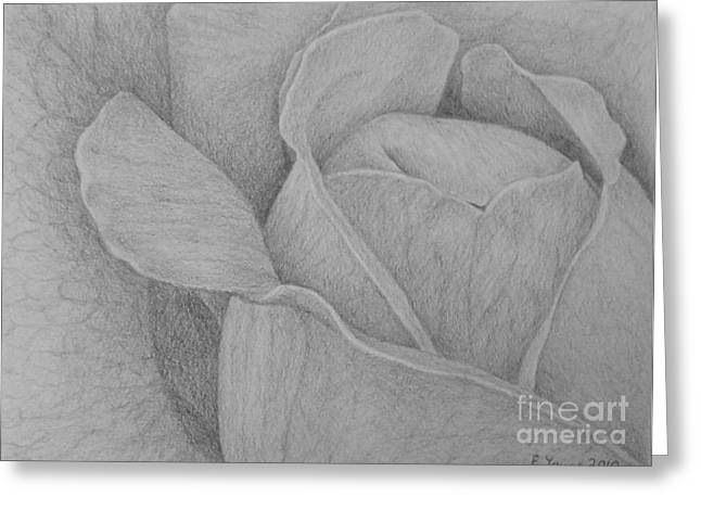 Veins Drawings Greeting Cards - Veined Rose Greeting Card by Emily Young