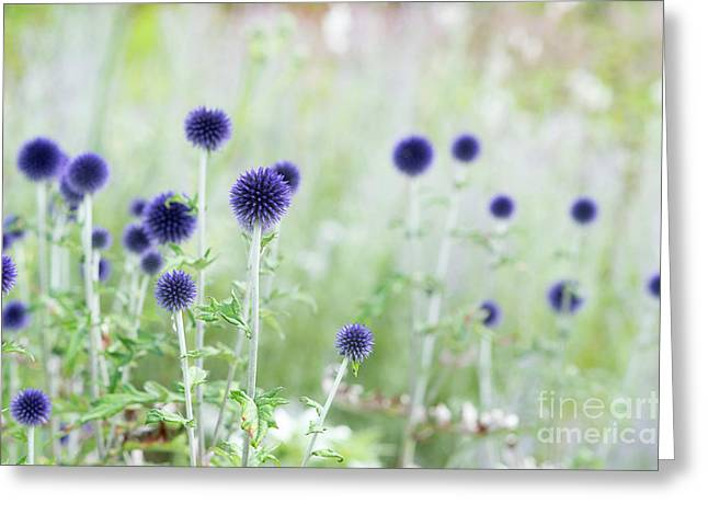 Veitchs Blue Greeting Card by Tim Gainey
