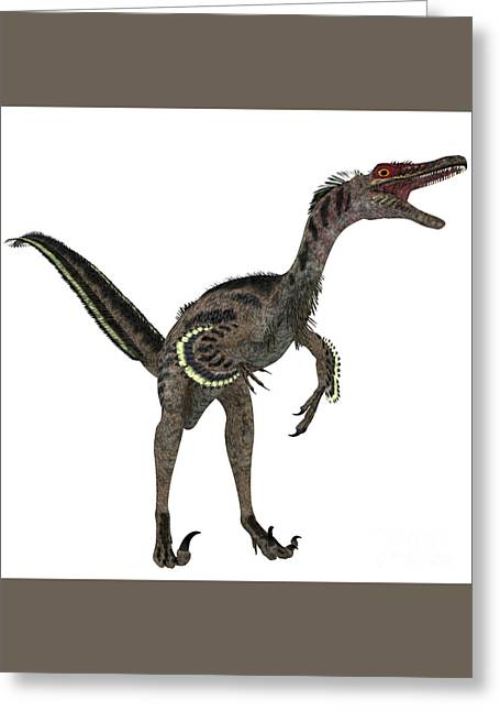 Velociraptor Greeting Cards - Velociraptor on White Greeting Card by Corey Ford