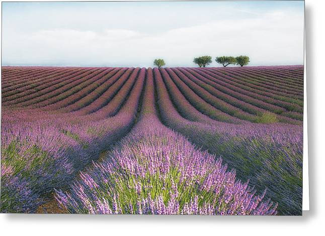 Summer Landscape Photographs Greeting Cards - Velours De Lavender Greeting Card by Margarita Chernilova