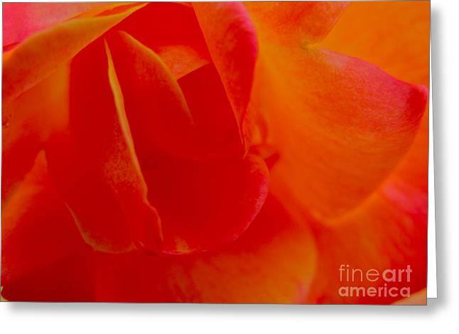Velvet Touch Greeting Card by PJ  Cloud