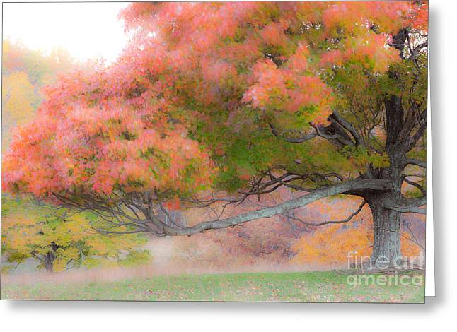 Fall Photos Paintings Greeting Cards - Velvety Silence Greeting Card by Dan Carmichael