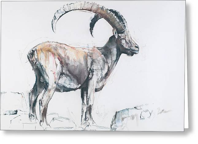 Goat Drawings Greeting Cards - Venerando Stambecco Greeting Card by Mark Adlington