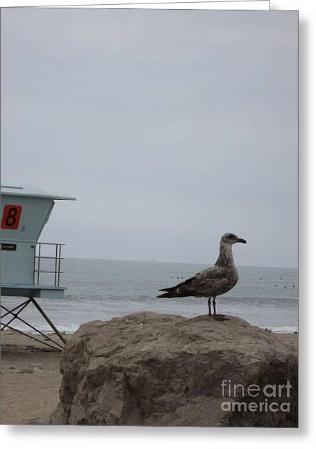 Ventura California Greeting Cards - Ventura Beach Seagull Greeting Card by Cassandra Raine