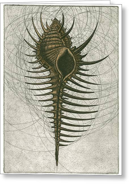 Atlantic Beaches Mixed Media Greeting Cards - Venus Comb Murex Greeting Card by Charles Harden