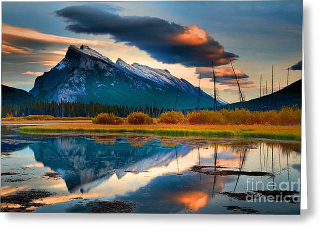 Rundle Greeting Cards - Vermillion Beauty Greeting Card by Tara Turner
