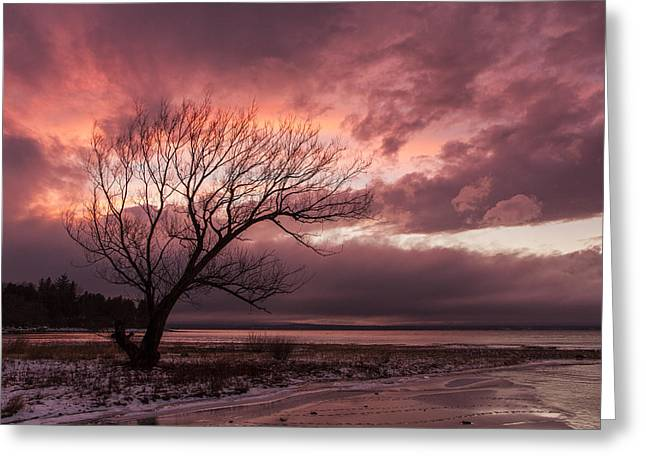 New England Snow Scene Greeting Cards - Vermont-Sunset-silhouette-Lake Champlain-Tree Greeting Card by Andy Gimino