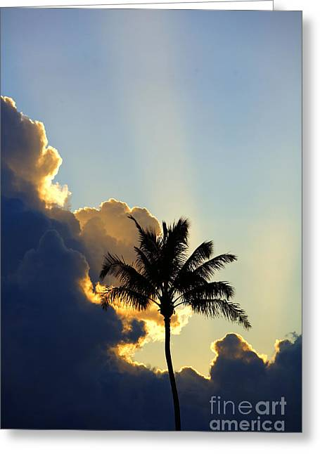 Amazing Sunset Greeting Cards - Vertical Tree Sunset Greeting Card by Ron Dahlquist - Printscapes