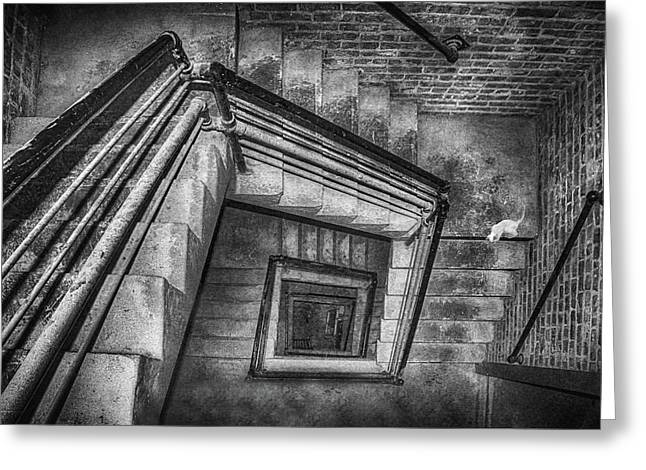 Rectangles Greeting Cards - Vertigo - Cat - Stairwell Greeting Card by Nikolyn McDonald