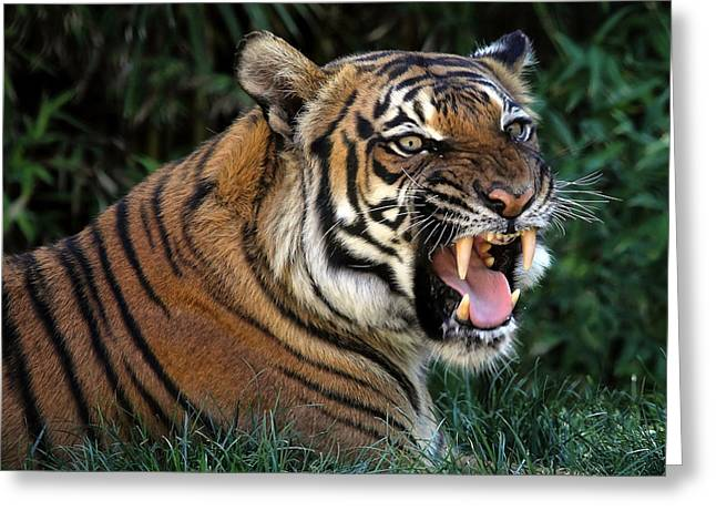 Growling Greeting Cards - Very Cranky Today Greeting Card by Elaine Malott