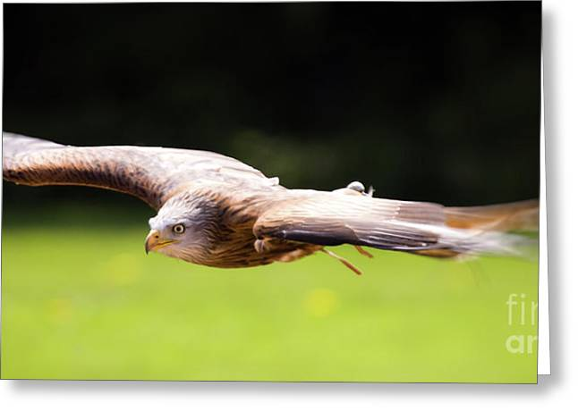 Red Kite Greeting Cards - Very Low Pass Greeting Card by Angel  Tarantella