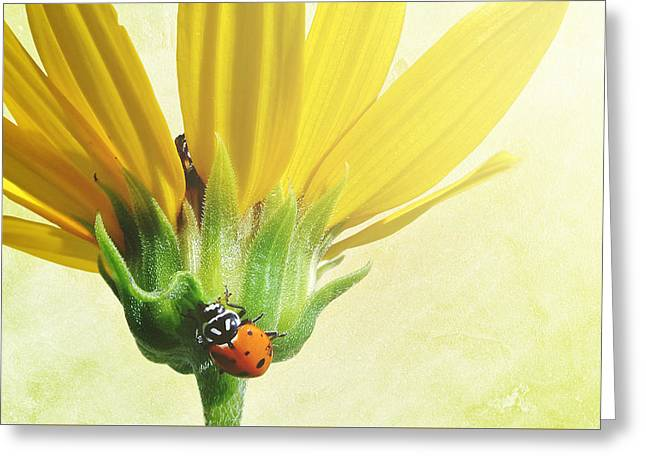 Yellow Sunflower Greeting Cards - Viatger Greeting Card by Greg Collins