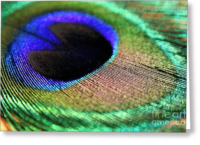 Decadence Greeting Cards - Vibrant colours of a peacock feather Greeting Card by Sami Sarkis