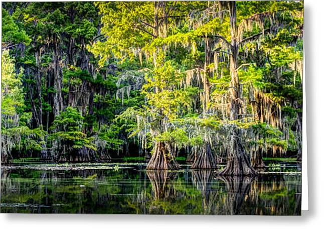 Vibrant  Cypress Scene Greeting Card by Geoff Mckay