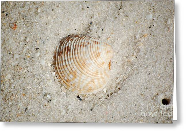 Puerto Rico Photographs Greeting Cards - Vibrant Orange Ribbed Sea Shell in Fine Wet Sand Macro Greeting Card by Shawn O