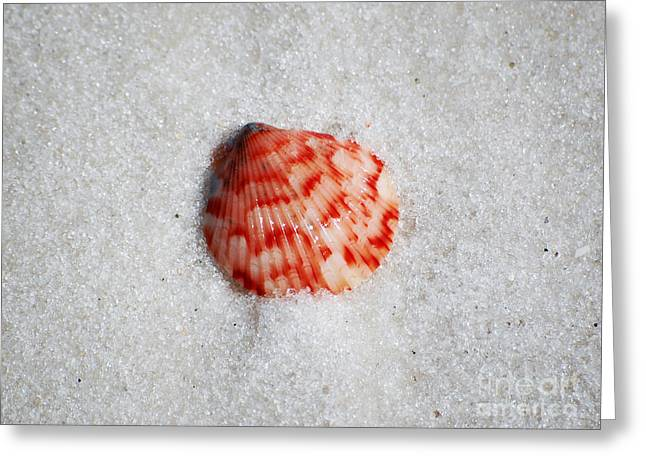Puerto Rico Photographs Greeting Cards - Vibrant Red Ribbed Sea Shell in Fine Wet Sand Macro Greeting Card by Shawn O