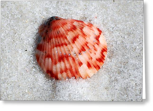 Vibrant Red Ribbed Sea Shell In Fine Wet Sand Macro Square Format Watercolor Digital Art Greeting Card by Shawn O'Brien