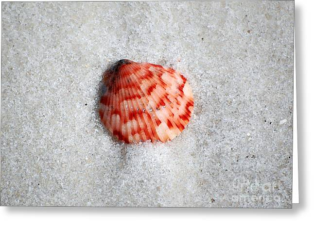 Vibrant Red Ribbed Sea Shell In Fine Wet Sand Macro Watercolor Digital Art Greeting Card by Shawn O'Brien