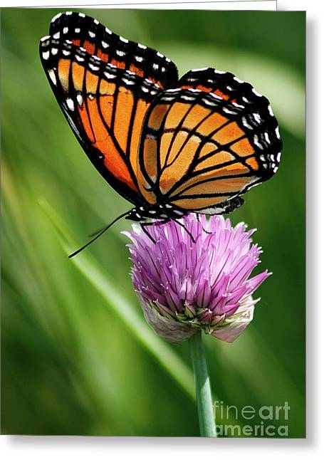 Flying Insects Greeting Cards - Viceroy on a Chive Greeting Card by Cindi Ressler