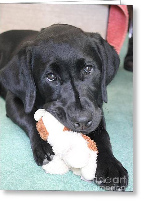 Puppies Photographs Greeting Cards - Vicki and Her Toy Greeting Card by Vicki Spindler